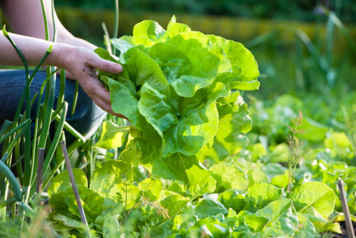 Organic gardening, hacks