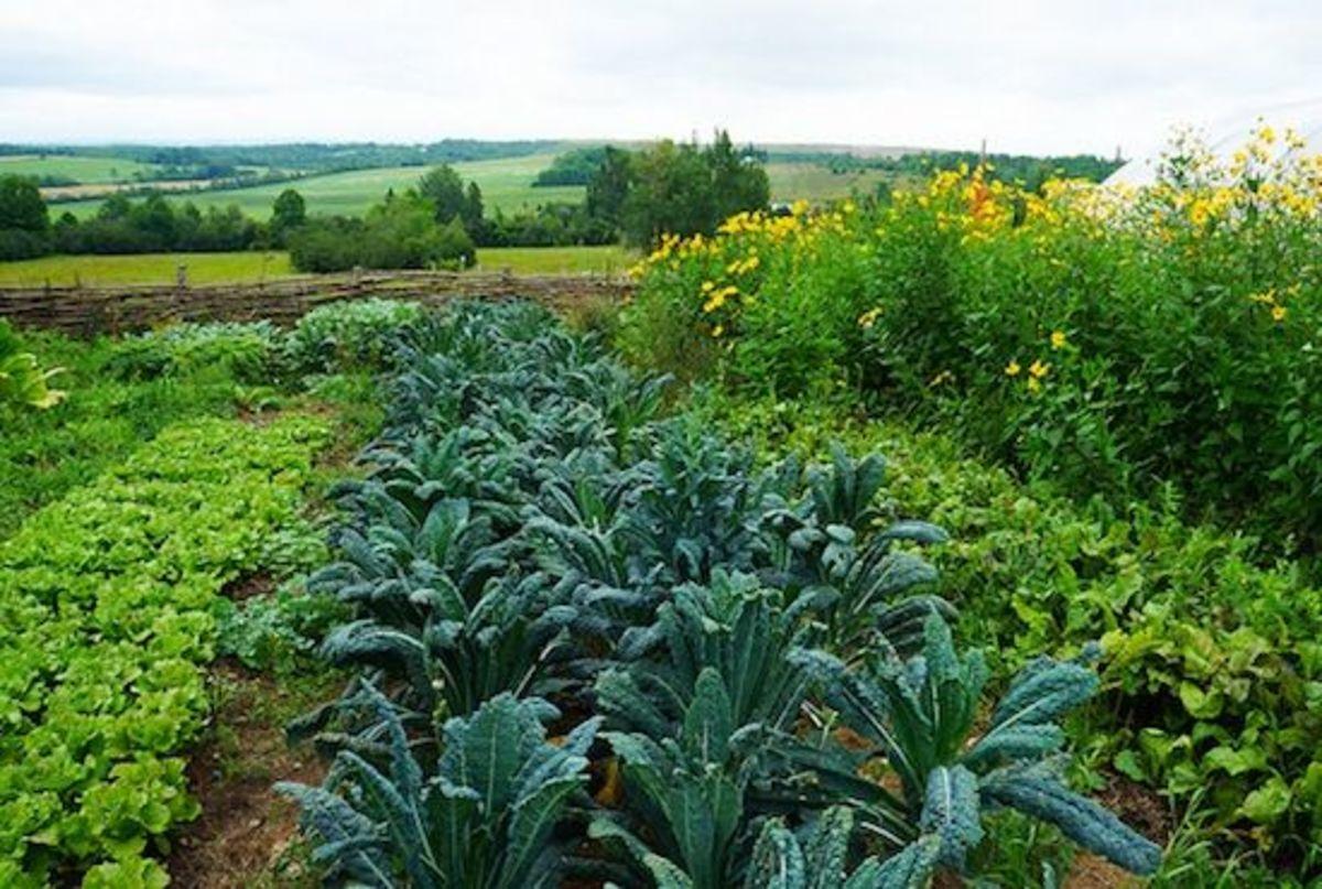 Organic gardening, classes