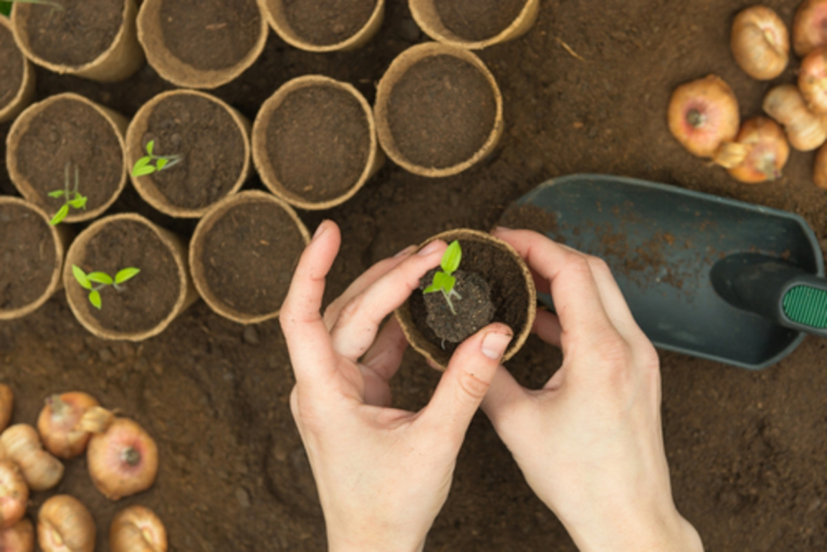 Organic gardening, seed starts