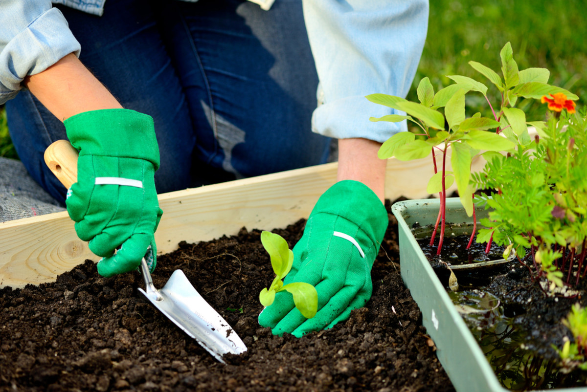 11 Organic Gardening Ideas to Make DIY Gardening a Snap
