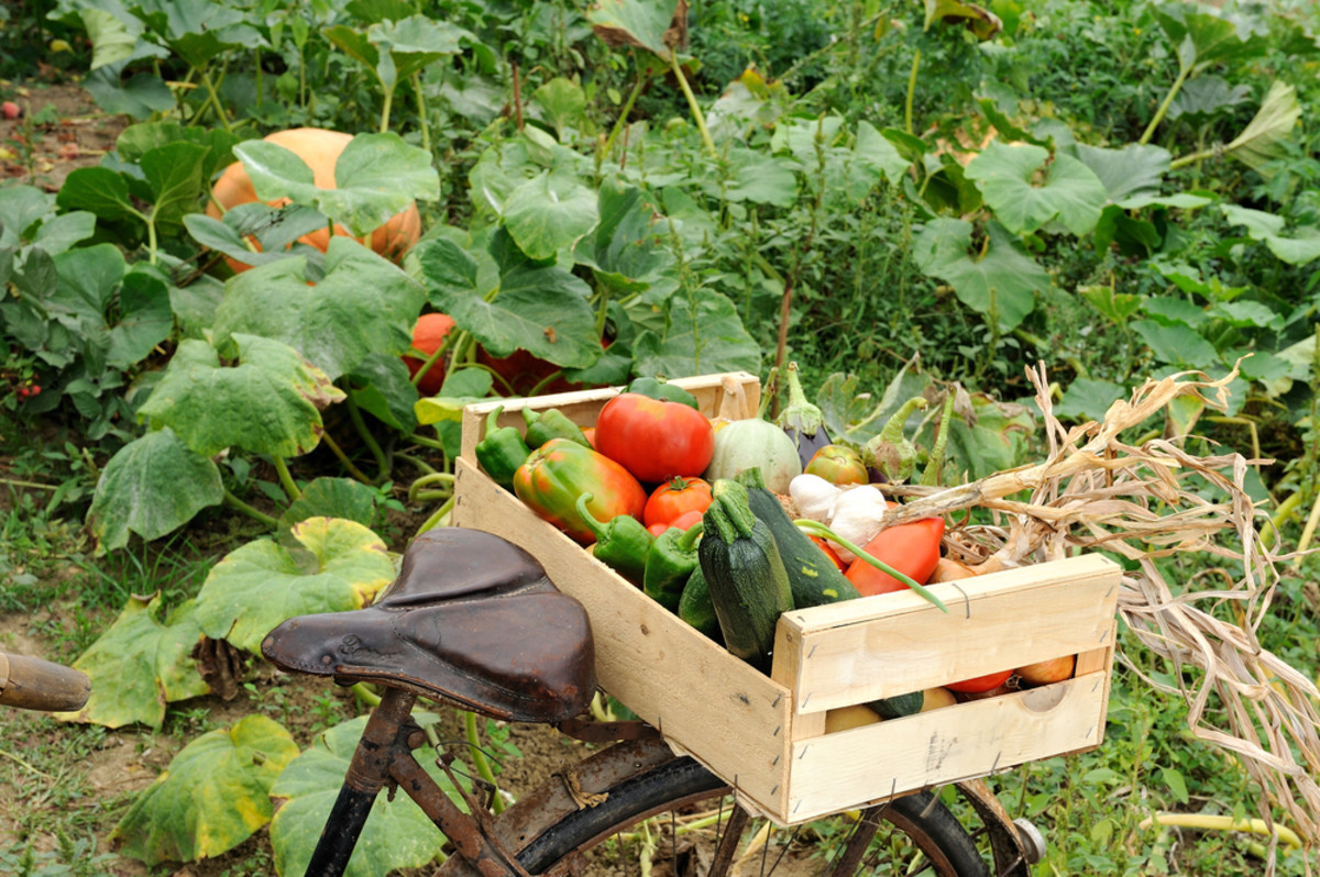 "Fleet Farming puts the ""green"" in vegetable delivery."