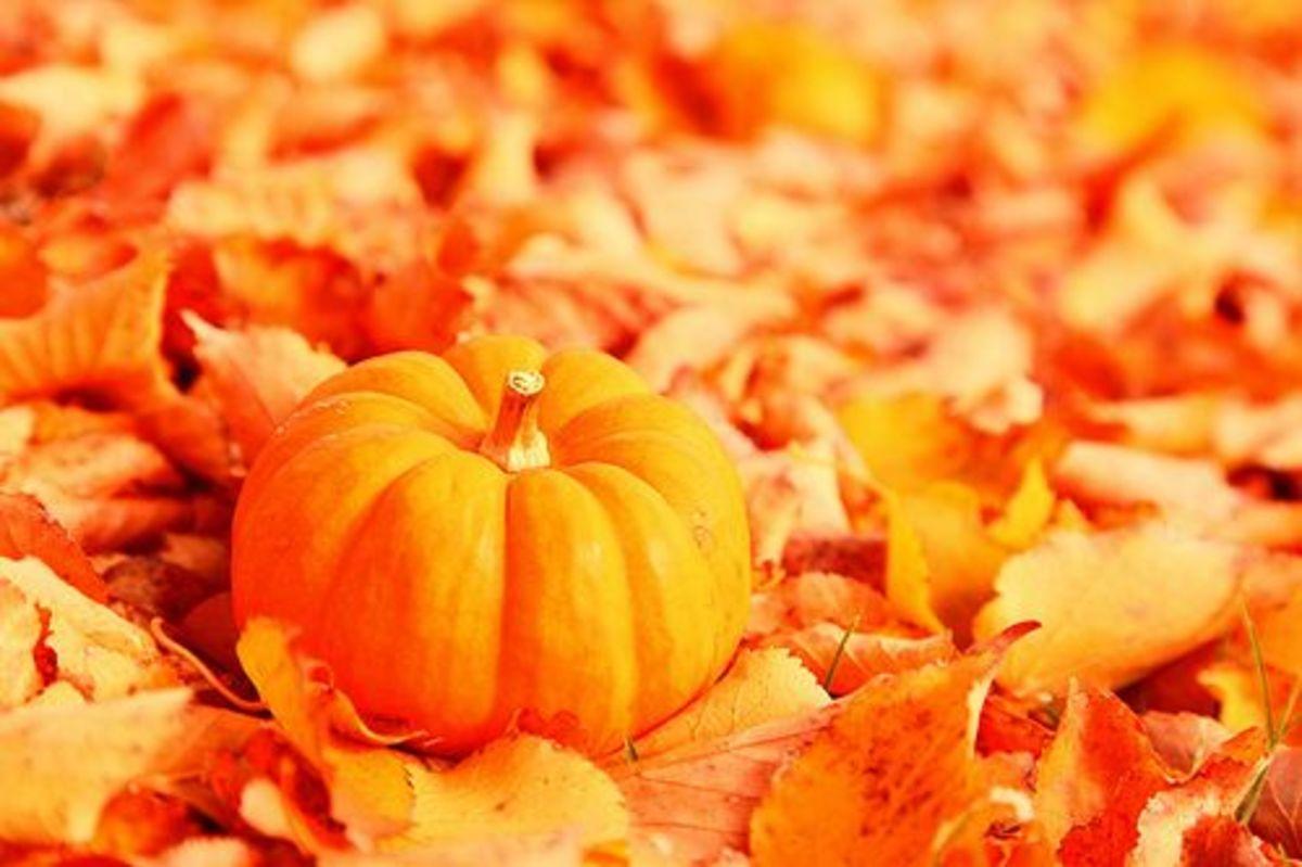 Pumpkinleaves-ccflcr-pinksherbertphotography