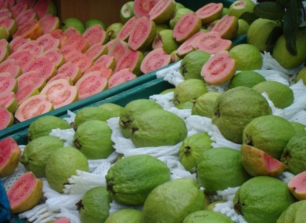 guava-for-diabetes-ccfl-greggman