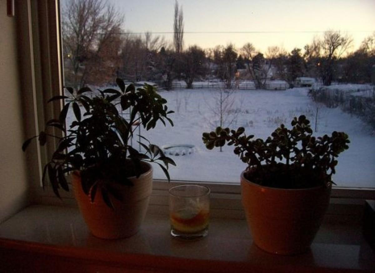 winterplants-ccflcr-shawnecono