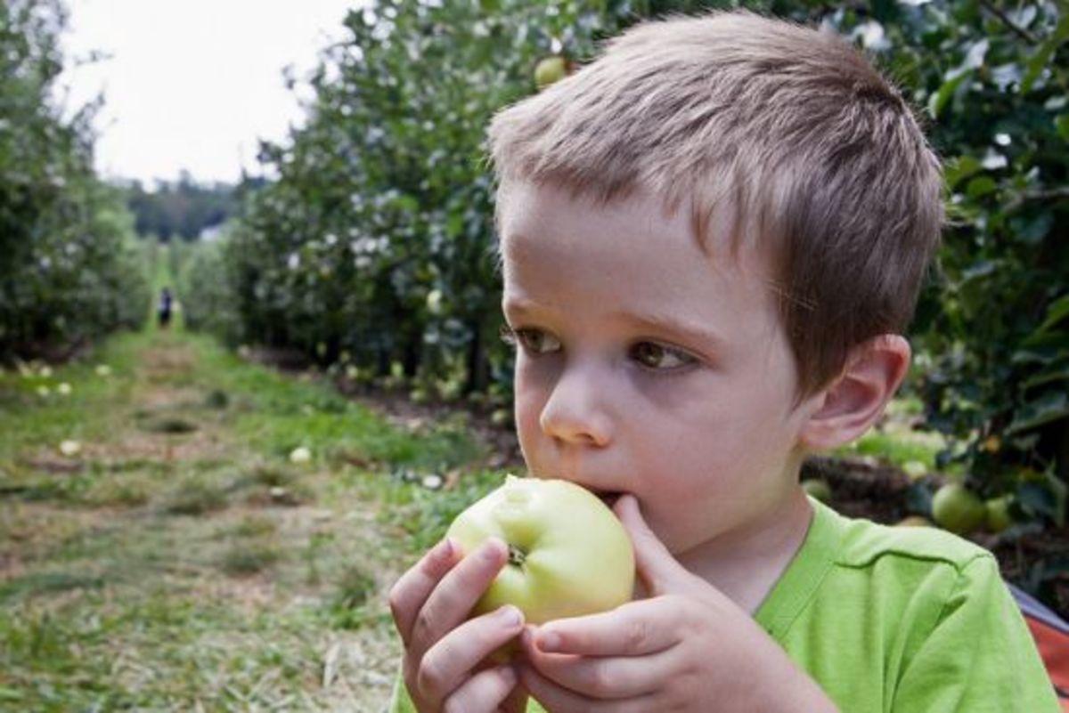 eatingapple-ccflcr-andrewmalone