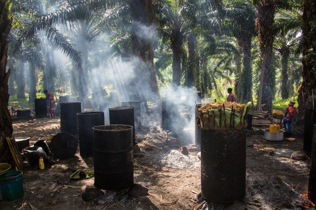 Can Palm Oil Truly Be Sustainable?