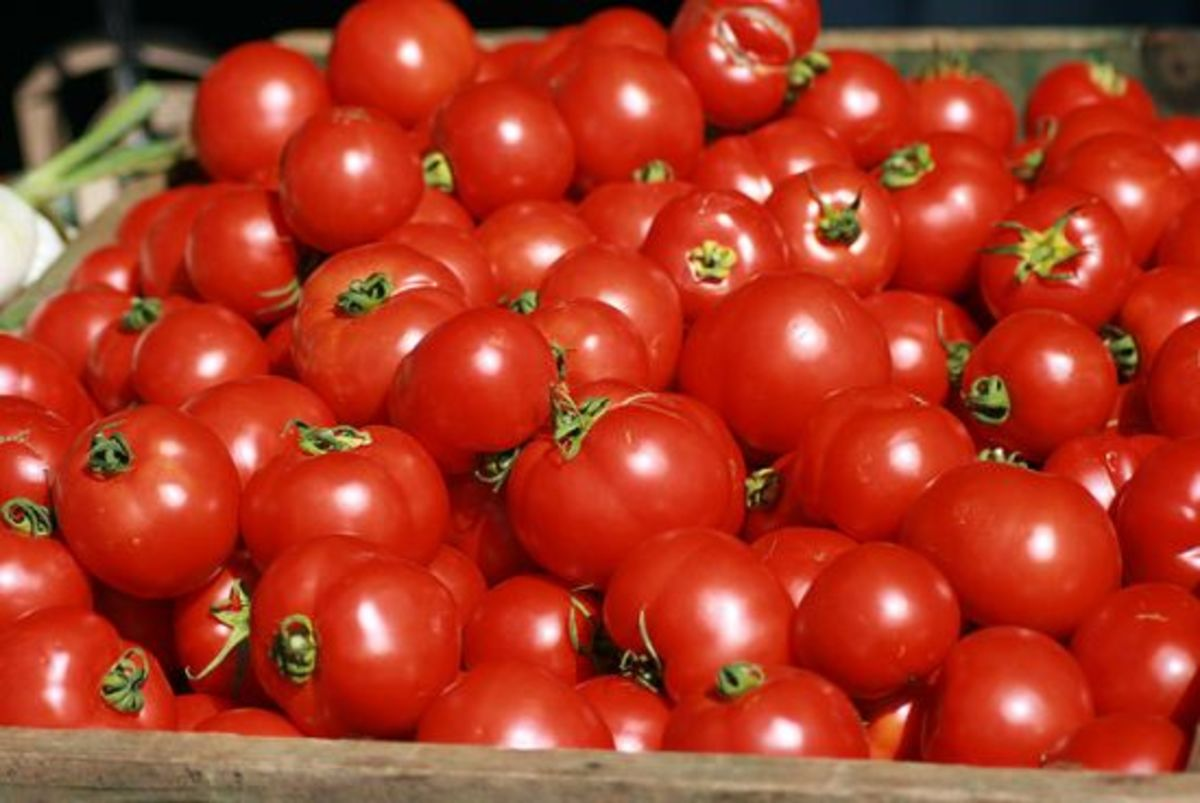 tomatoes-ccflcr-Swami-Stream
