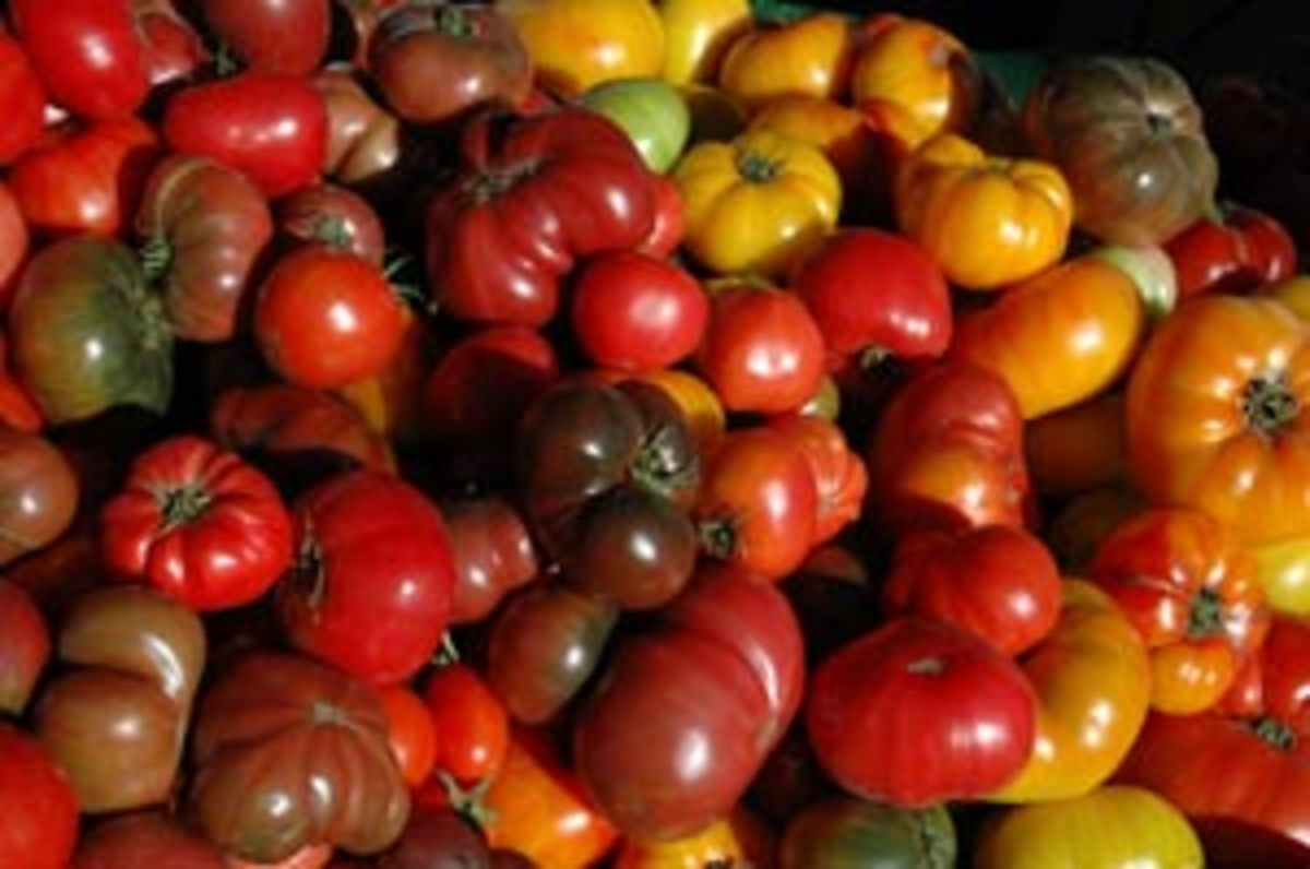heirloom_toms2