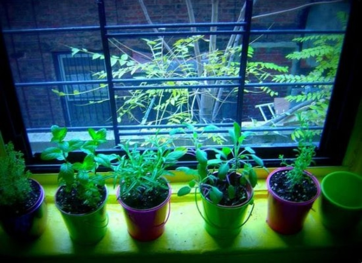 plants-indoors-for-winter-ccfl-sugarhiccuphiccup