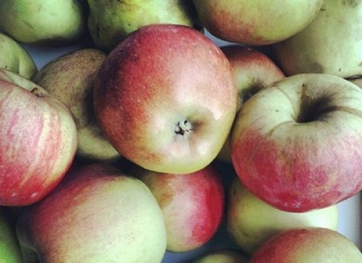 apple-ccflcr-fotografeleen