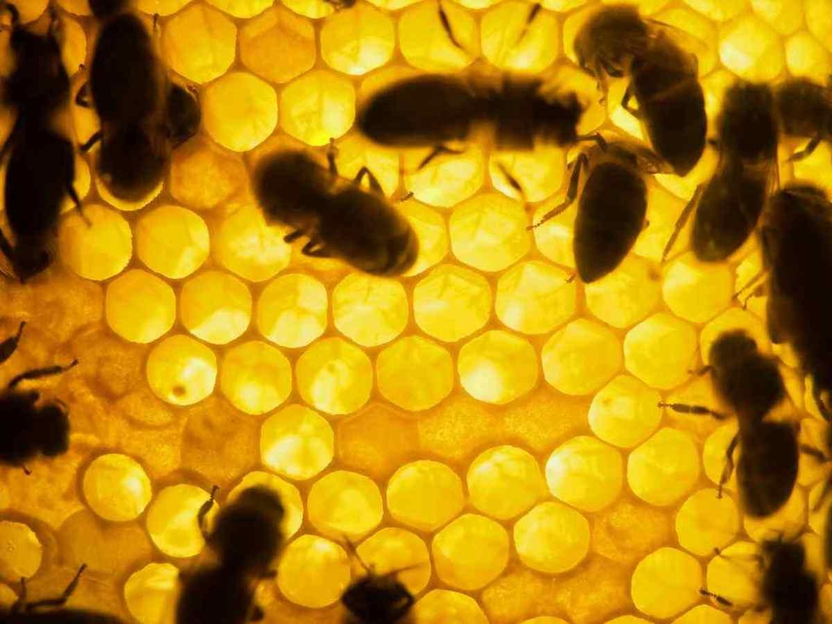 honeycomb6-15