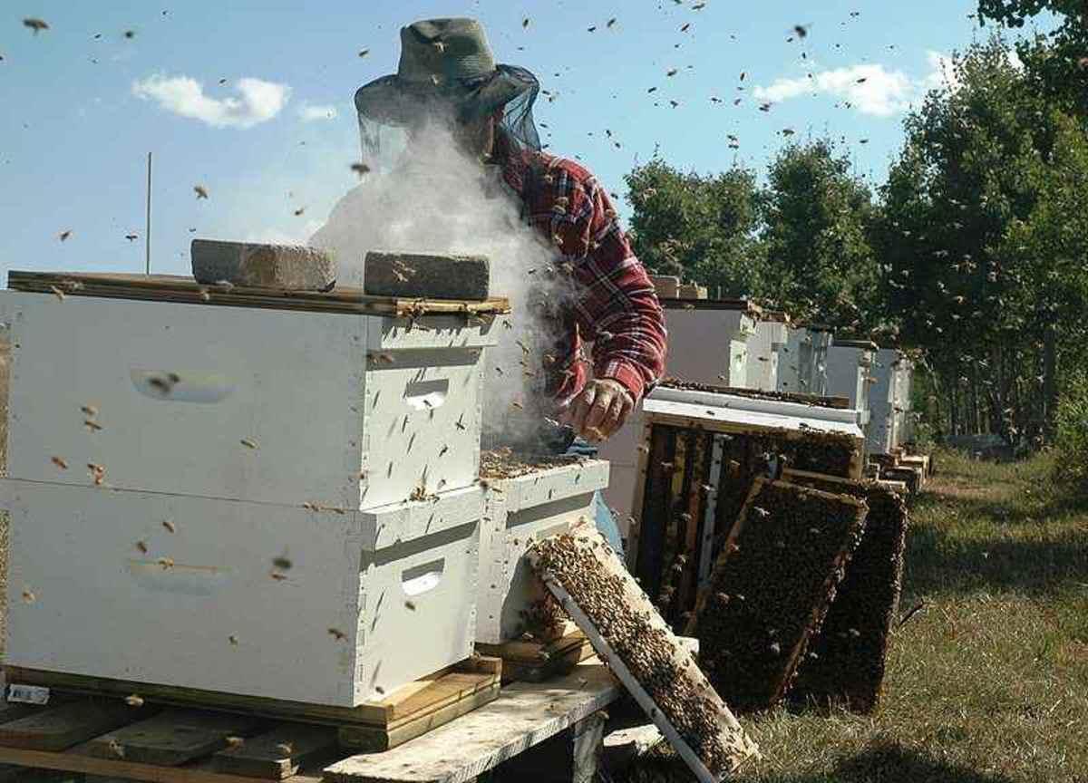 beekeeper6-15
