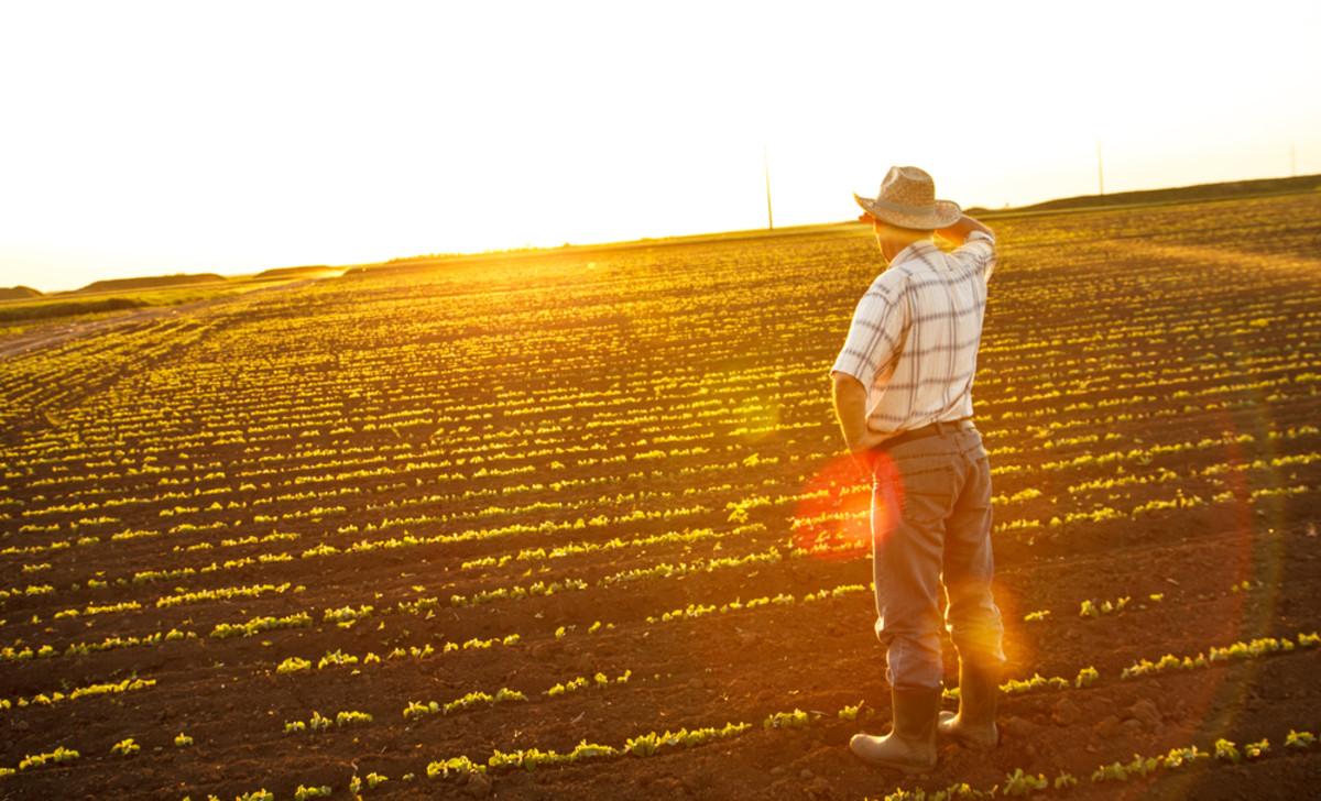 Organic Trade Group Loses Farmer Members Over Controversial GMO Labeling Bill