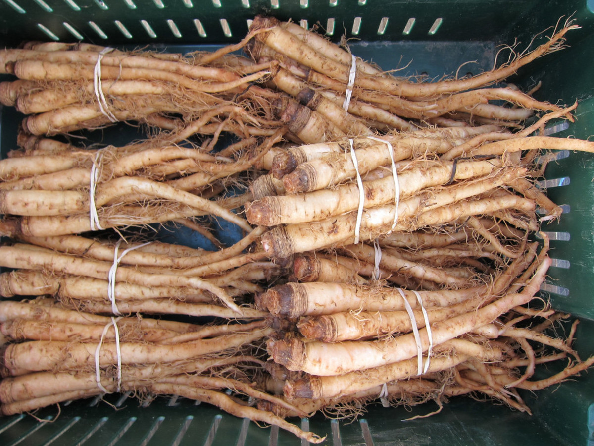 Meet Salsify The Hottest Root Vegetable So Ugly It Just