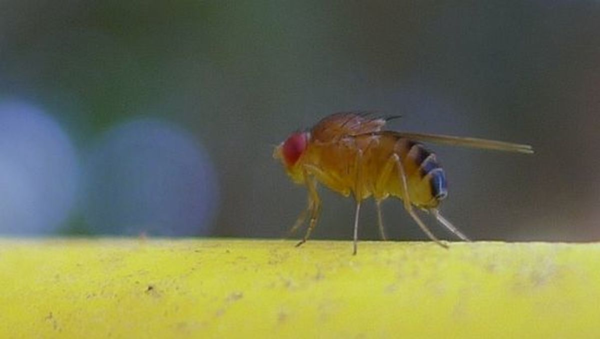 How to get rid of midges in the house Good advice