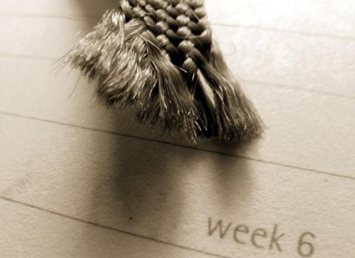 diary-ccflcr-Matt-Erasmus