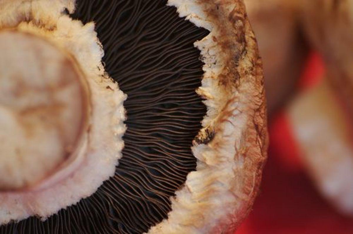 mushrooms-ccflcr-mnem