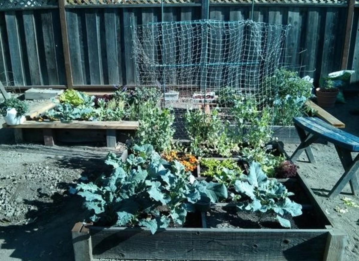 gardengarden