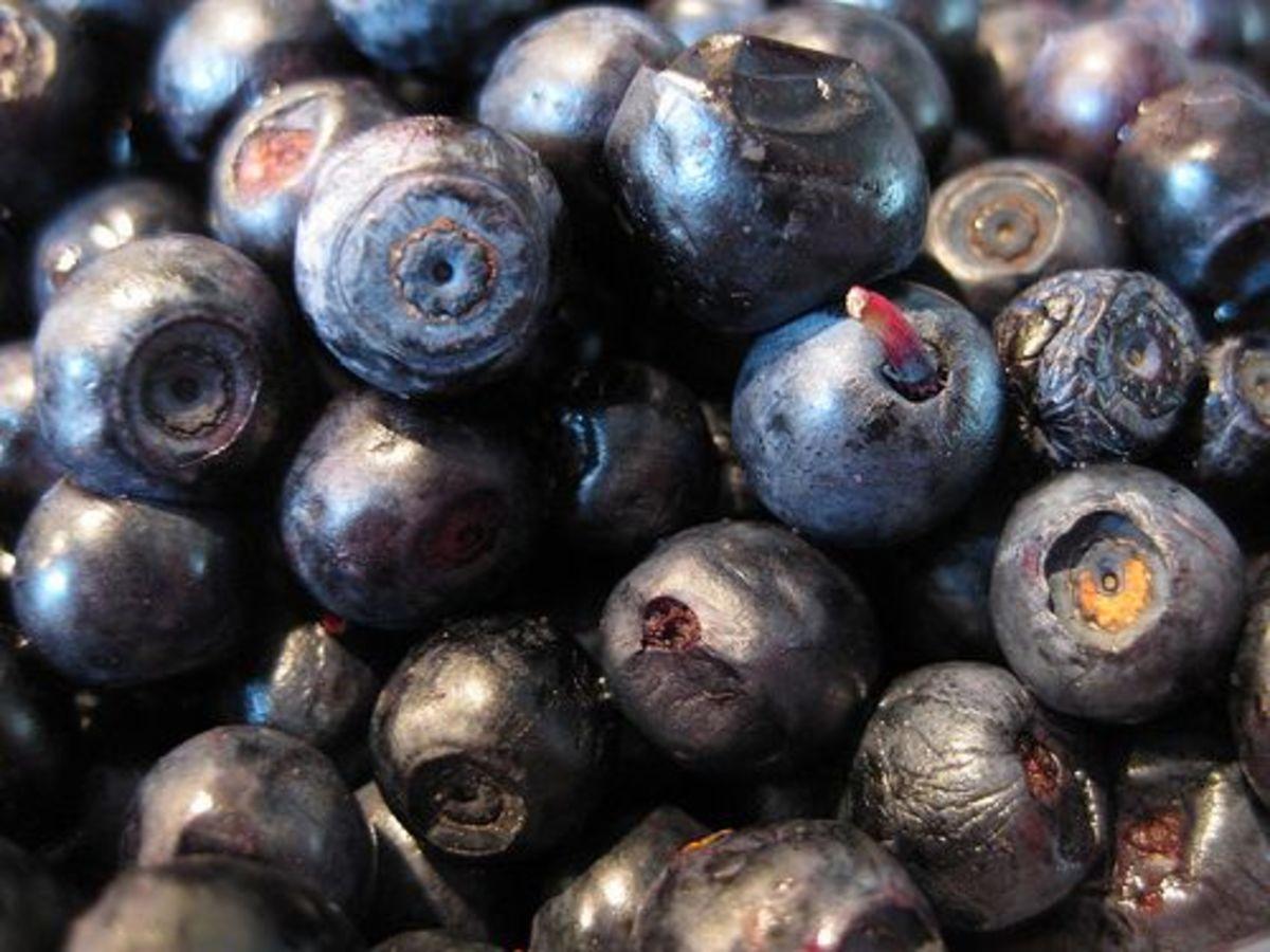 blueberries-ccrlcr-Marijn-de-Vries-Hoogerwerff