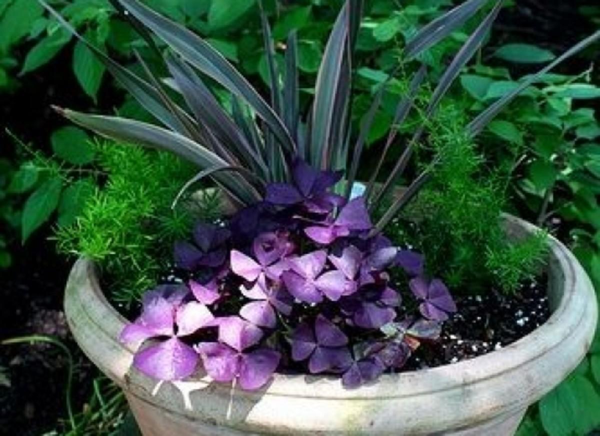 purple-ccflcr-heather