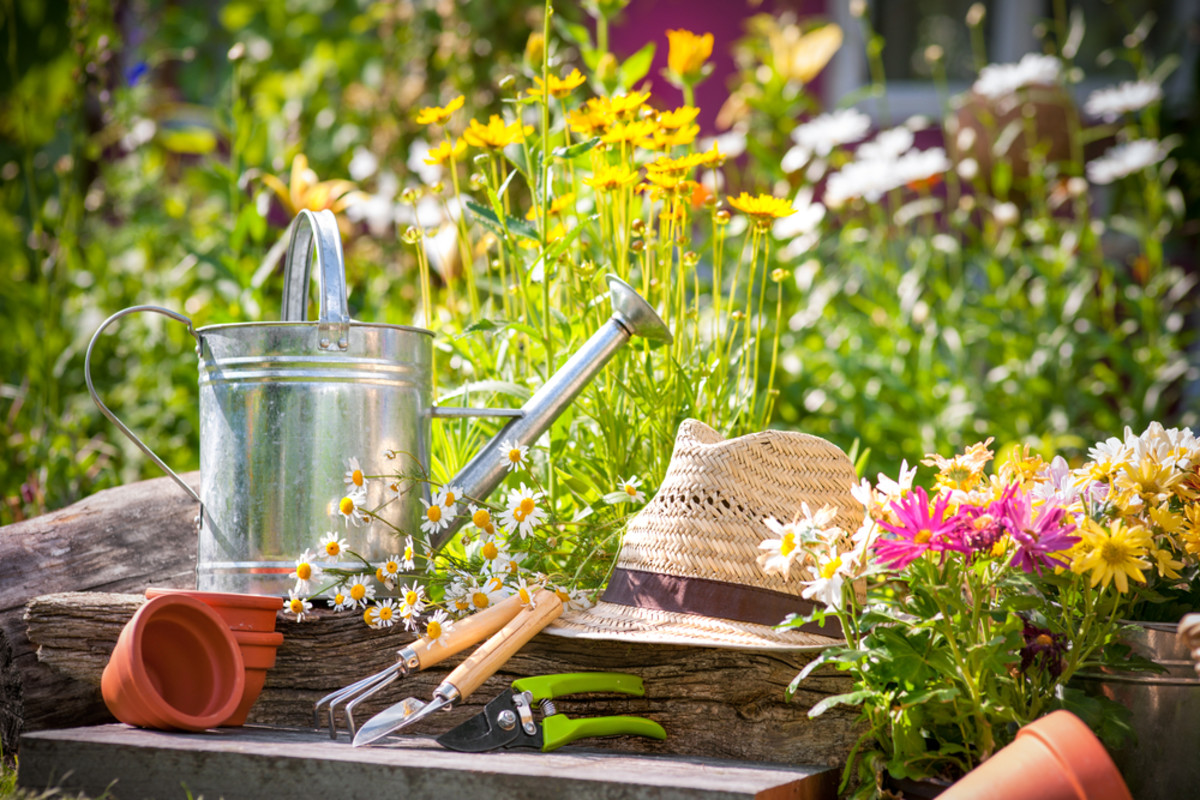 Image result for Gardening At Your Home