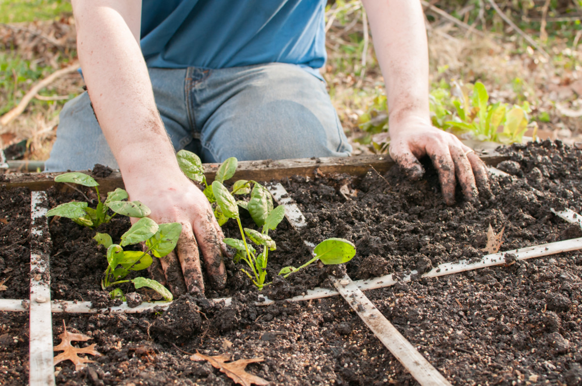 Square Foot Gardening Tips