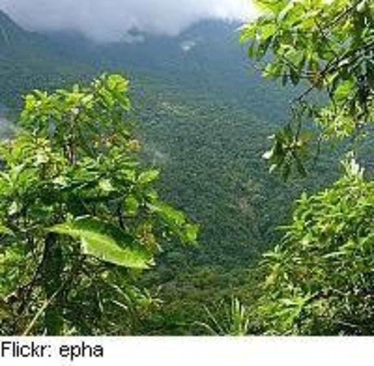 rainforest13