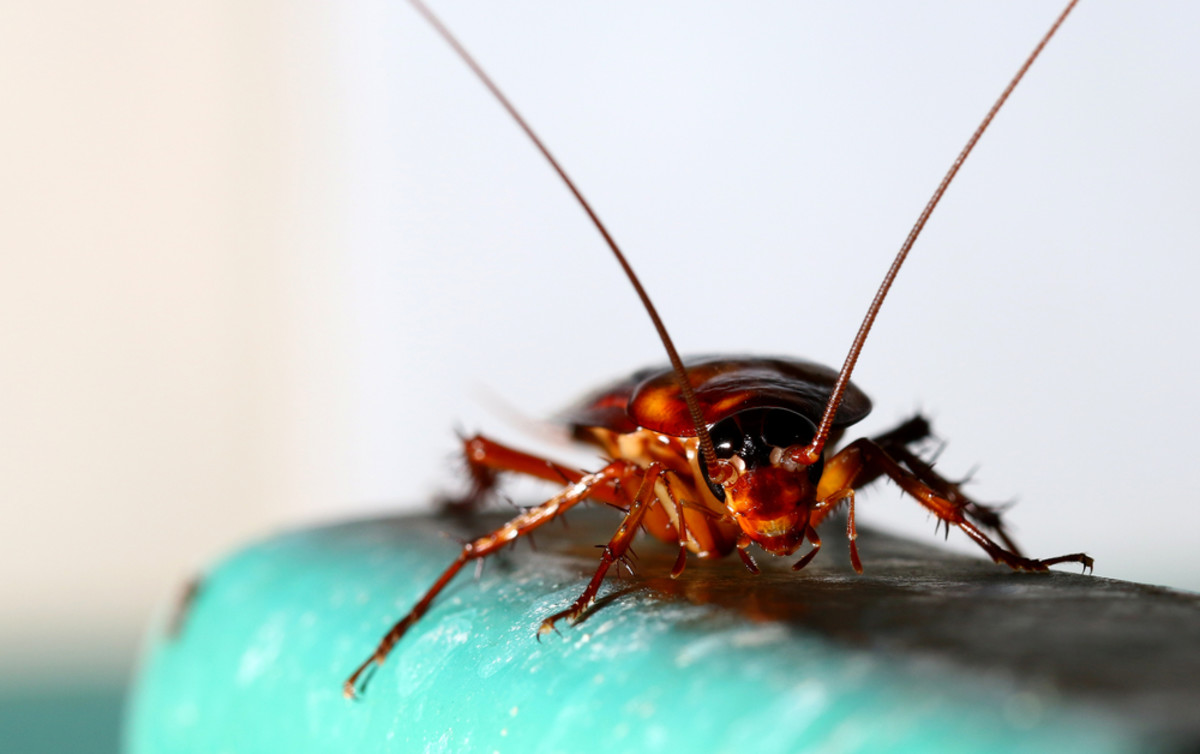 Cockroach Milk or Donald Trump? The Future Totally SUCKS
