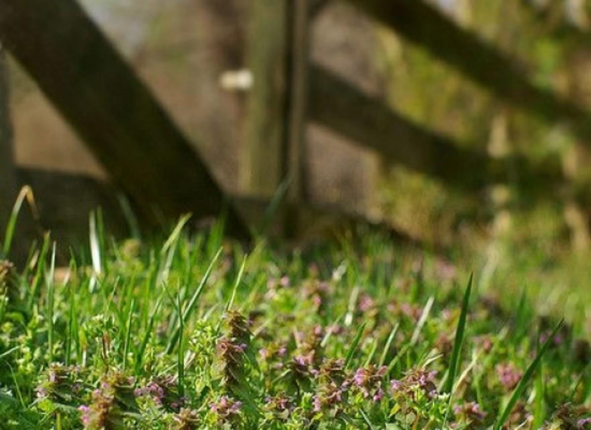 weeds-ccflcr-evoo73