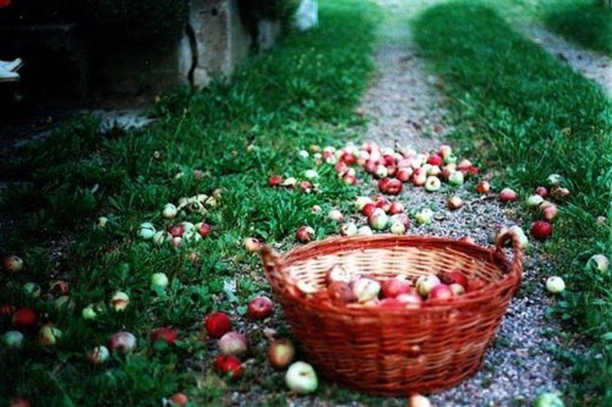 Apple-recipes-ccflcr-mcmrbt