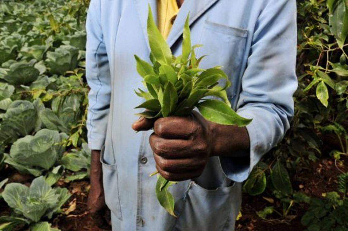 kenyanfarmer-ccflcr-CIAT-International-Center-for-Tropical-Agriculture1
