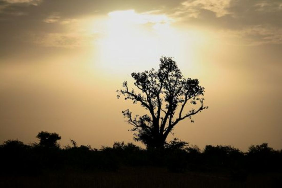 baobabtree-ccflcr-angela7dreams