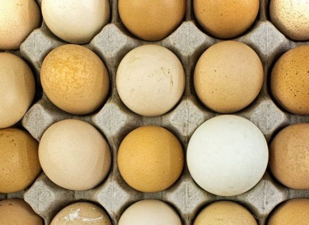 egg-ccflcr-bobjagendorf