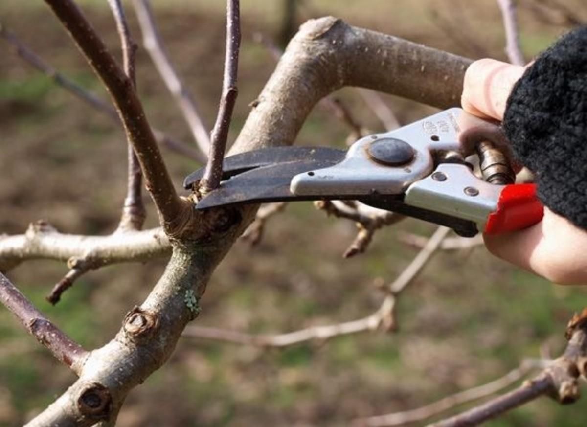 pruning-felcos