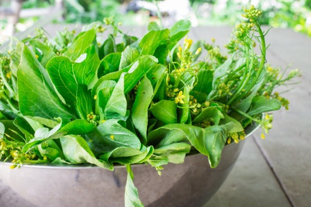 For the Love of Kale: Eating Leafy Greens Keeps Your Mind Sharp