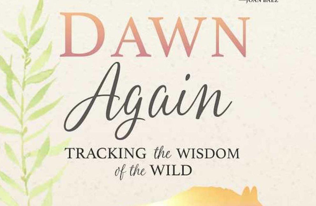 dawn-again.w300