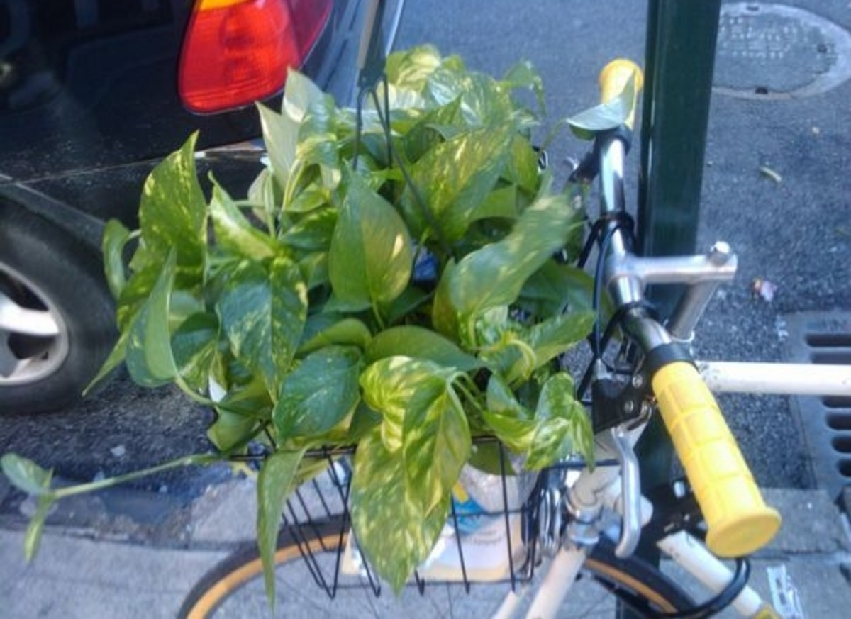 bike-plants-ccflcr-dannyman