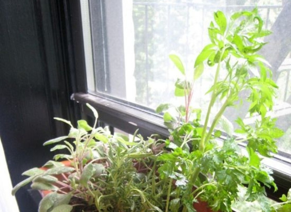 herbs-ccflcr-mmadden