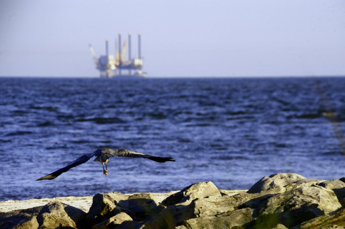 Factory Farming Causing Dead Zones in Gulf of Mexico