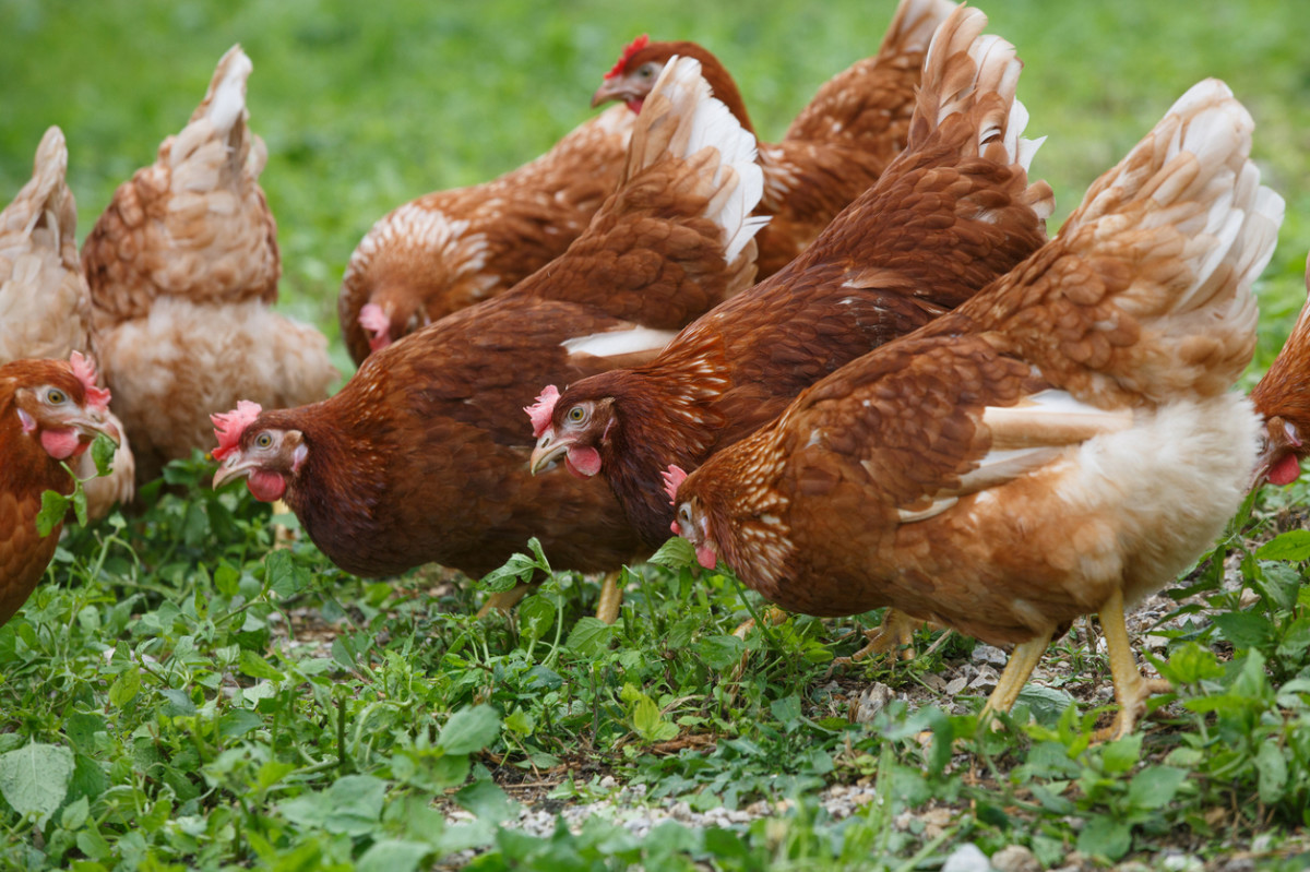 Suit Filed Against USDA for Ignoring Animal Welfare in Organic Production