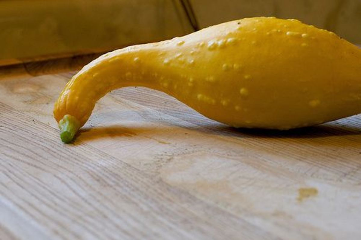 yellow-sqaush-ccflcr-cogdogblog