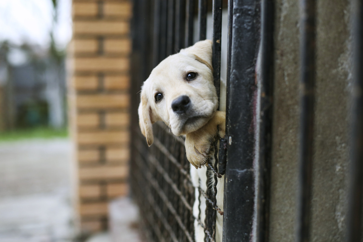 Enter title here USDA's Animal Welfare Records Still Obscured Despite New Public Search Tool, Says Animal Rights Groups