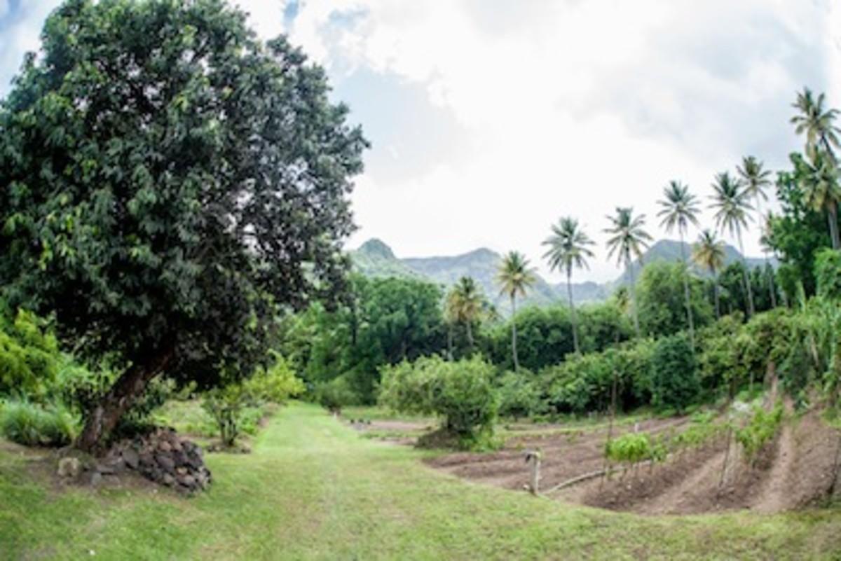 Organic Garden to Farm Restaurant in St. Lucia