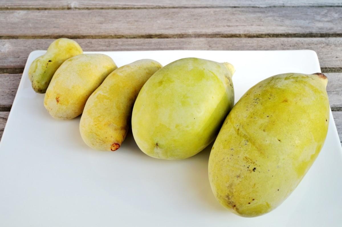 Unripe pawpaw fruit.