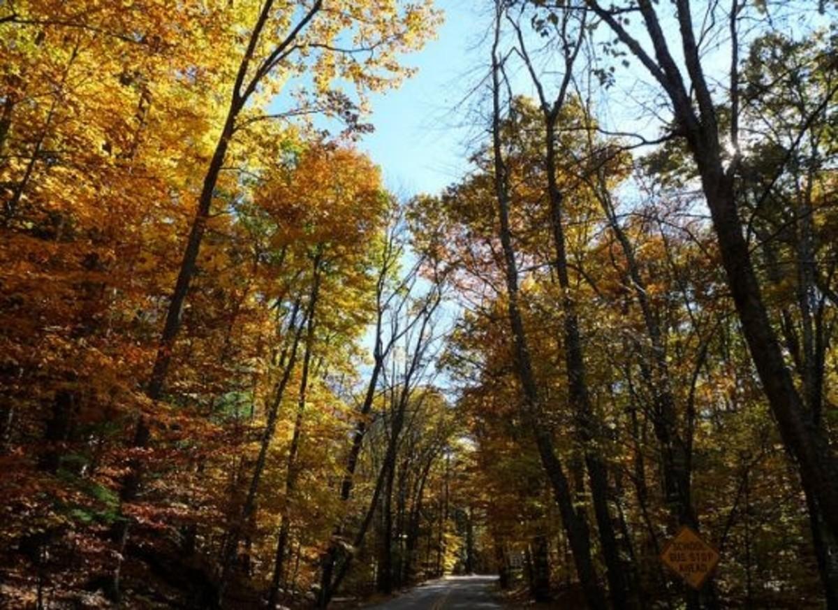 fall-trees-thisreidwrites
