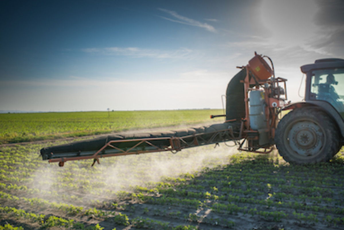 USDA Approves New Genetically Modified Crops from Monsanto