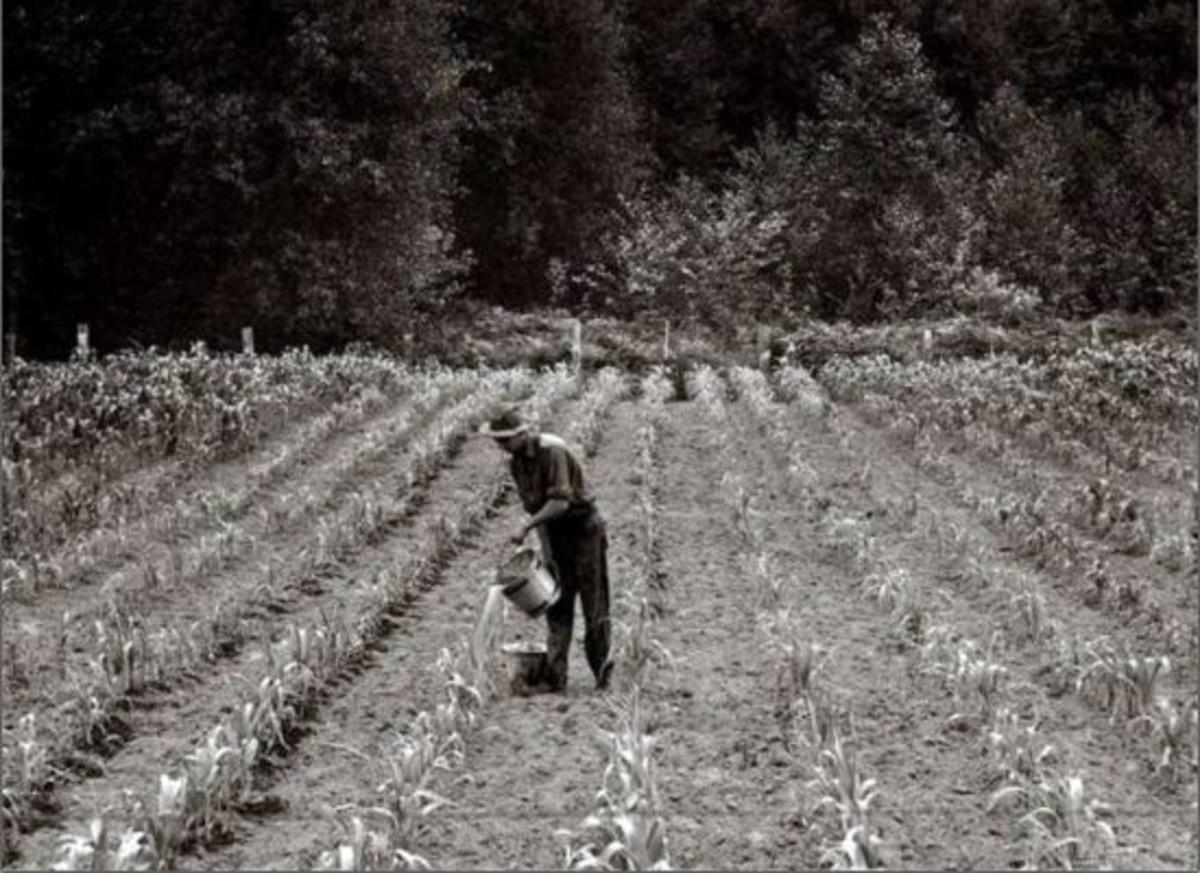 cornfield-ccflcr-erjkprunczyk1