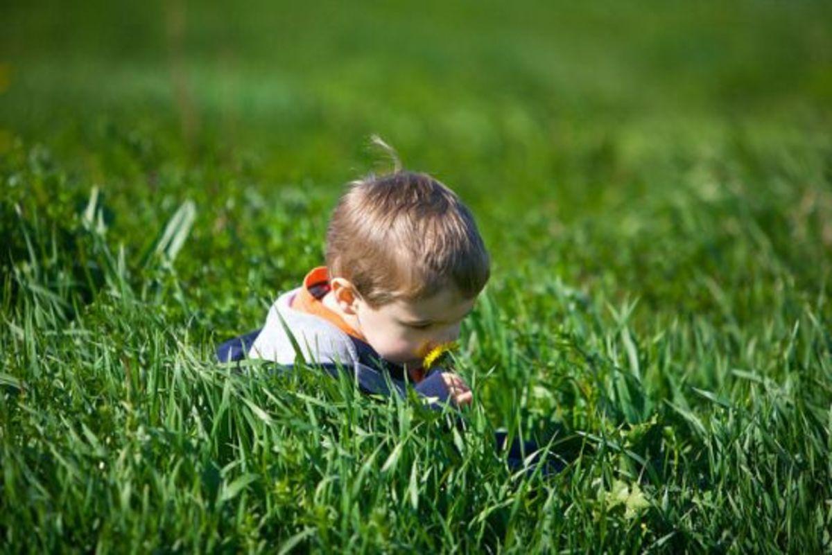 grass-ccflcr-juhansonin