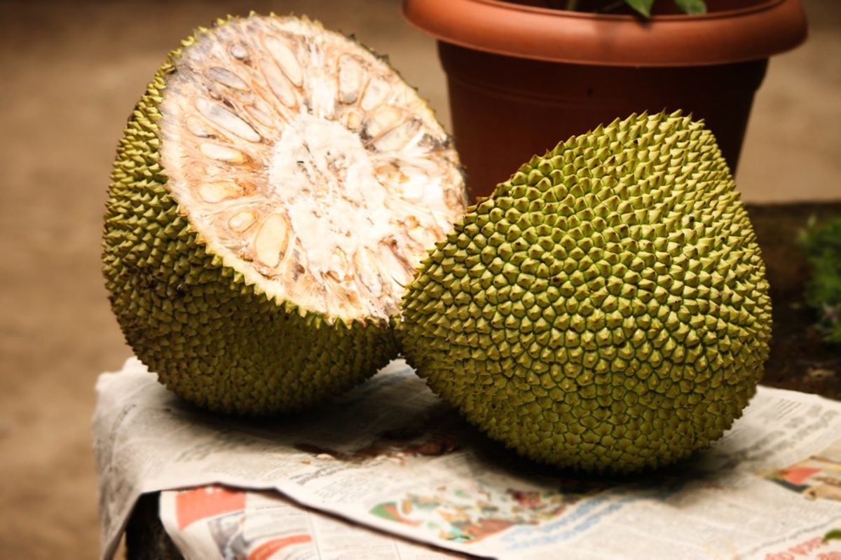 jackfruit nutrition