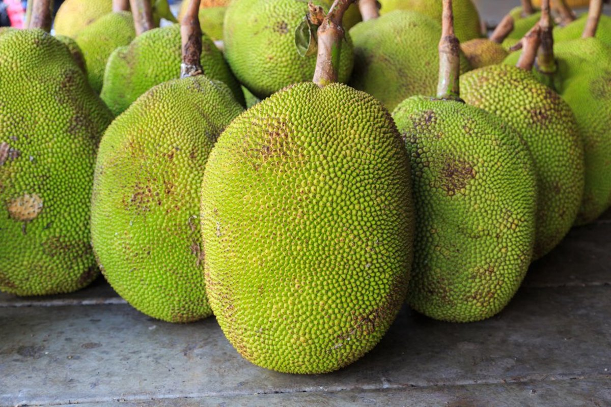 what is jackfruit and why is it in your tacos?, Natural flower